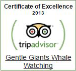 Gentle Giants TripAdvisor Certificate of Excellence