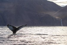 SA_Perfect autumn whale watching1.jpg
