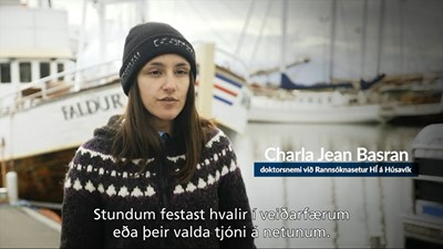PhD student Charla Basran explains her research of humpback entanglement in fishing gears, Húsavík, Iceland